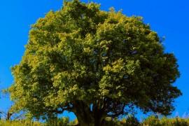 中国临沧红茶节全球500余茶人觐拜3200年古茶树