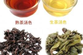 普洱茶生茶和熟茶功效对比