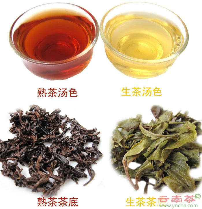 普洱茶生茶熟茶对比.jpg