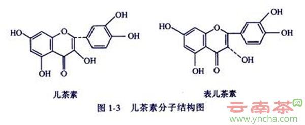 儿茶素分子结构.jpg