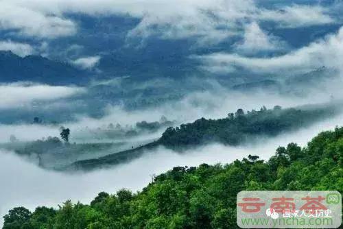 云南普洱茶六大古茶山300年沉浮6.jpg