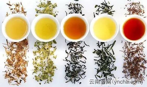 发酵茶和不发酵茶1.jpg