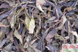 关于普洱茶老黄片