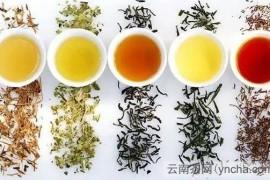 什么是发酵茶和不发酵茶?发酵茶和不发酵茶的区别