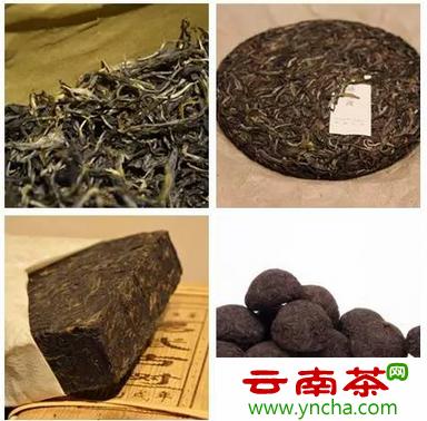 普洱茶分类.png